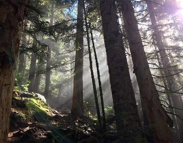 Great Forests of Canada