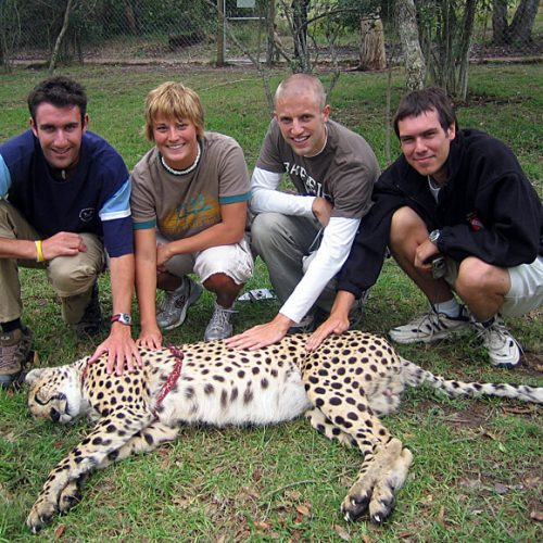 Cheetah Encounter South Africa