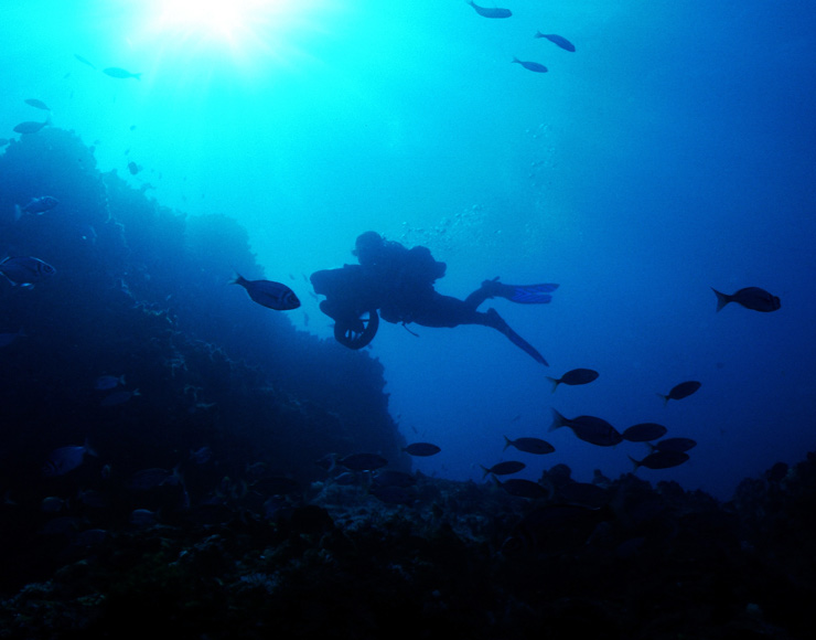 Scuba Diving in South Africa