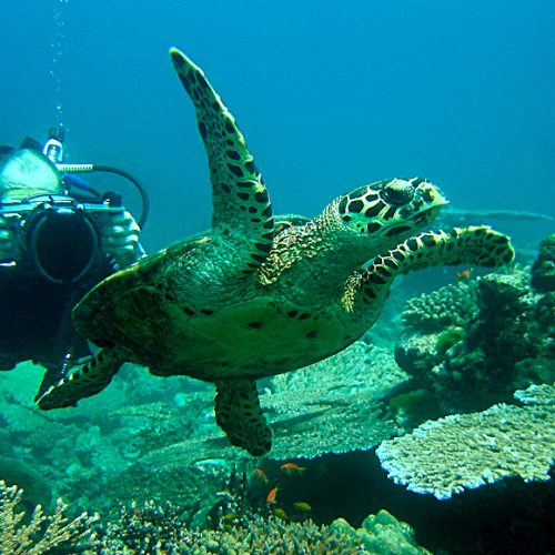 Scuba Dive with Turtles in Thailand